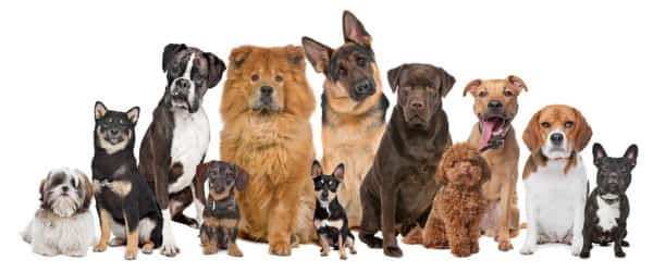 Dog breeding: How to Breed Dogs Successfully easy Tips For All